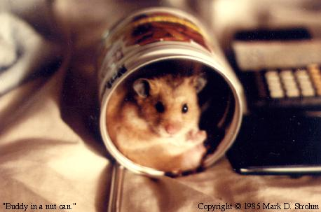 Buddy, the hamster, in a nut can.